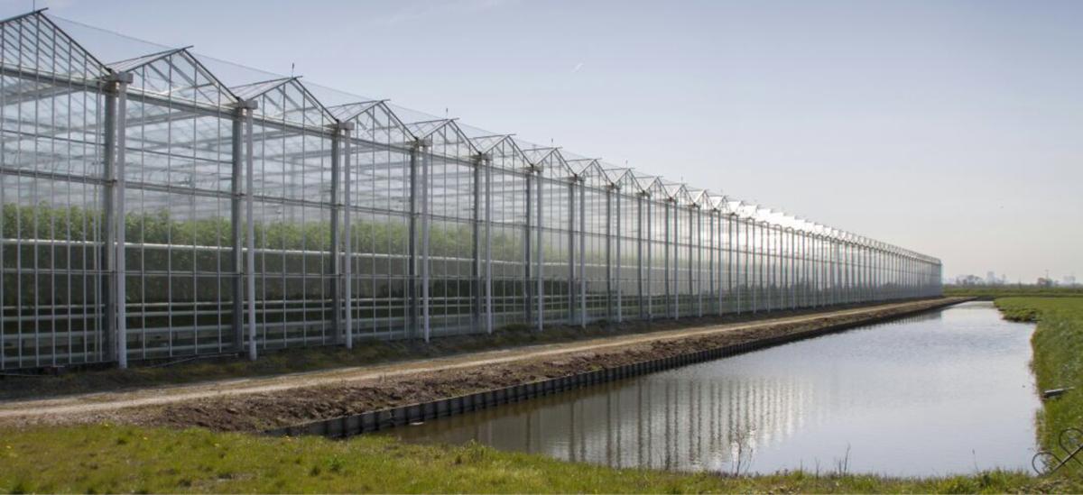 Rotterdamse werklozen vinden baan in tuinbouw