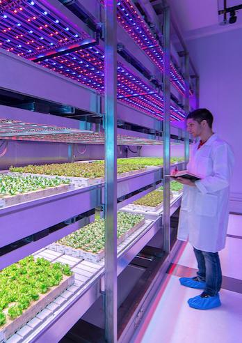 """'Komend decennium 3000 miljoen dollar investeringen wereldwijd in vertical farming"""""""