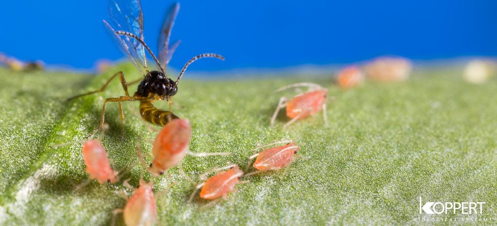 'Zie biodiversiteit niet als kostenpost'