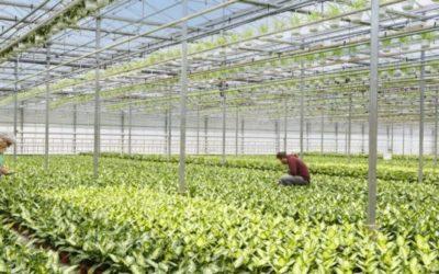 Nieuwe Leerlijn bedrijfsleider (glas)tuinbouw