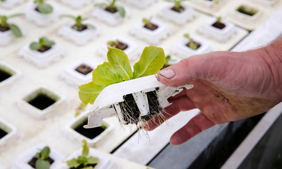 Concurrentiepositie Zuid-Hollandse tuinbouw versterkt door oprichting Greenport Nederland