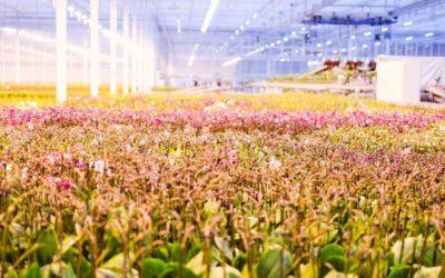 OK Plant wint zilver bij International Grower of the Year 2019