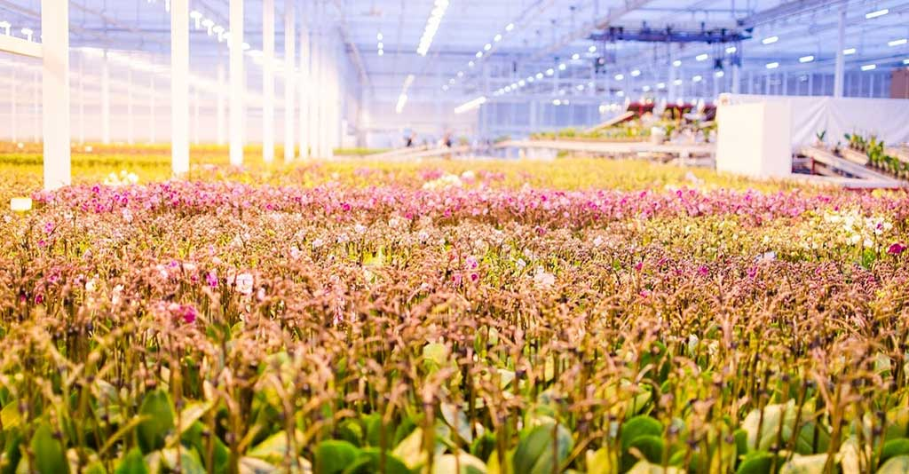 OK Plant wint zilver bij International Grower of the Year 2019