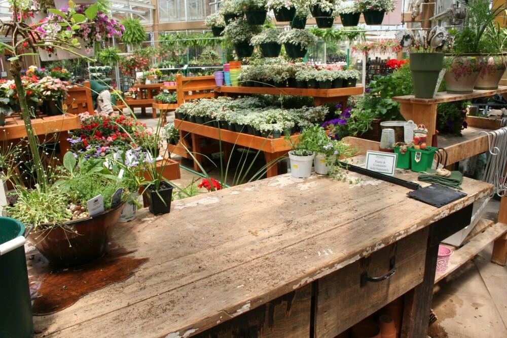 Tuincentra en tuinwinkels vragen kabinet open te mogen vanaf 3 maart